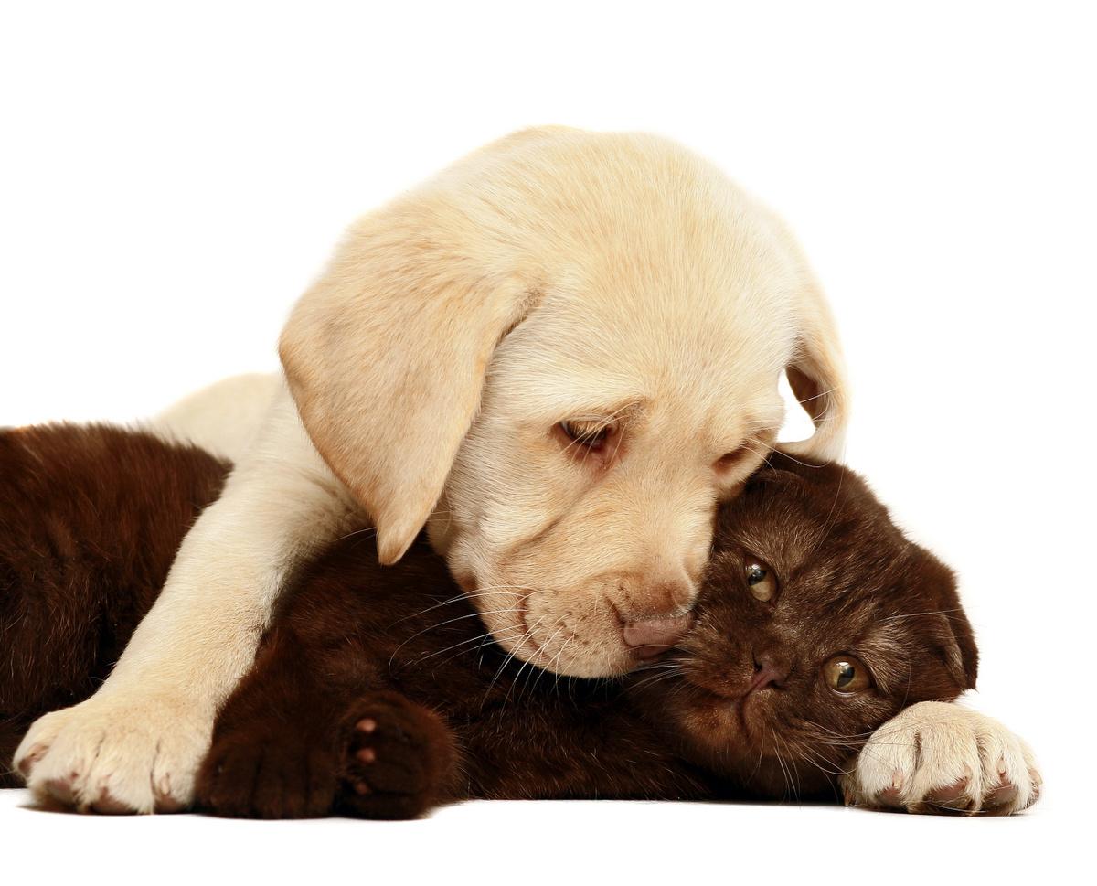 Hunde helfen bei Depression (© Larisa Kursina / Fotolia)
